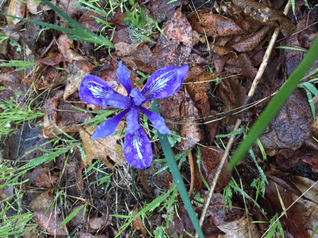 CANCELED: Spring Wildflowers and Plant Uses @ Sugarloaf Ridge State Park