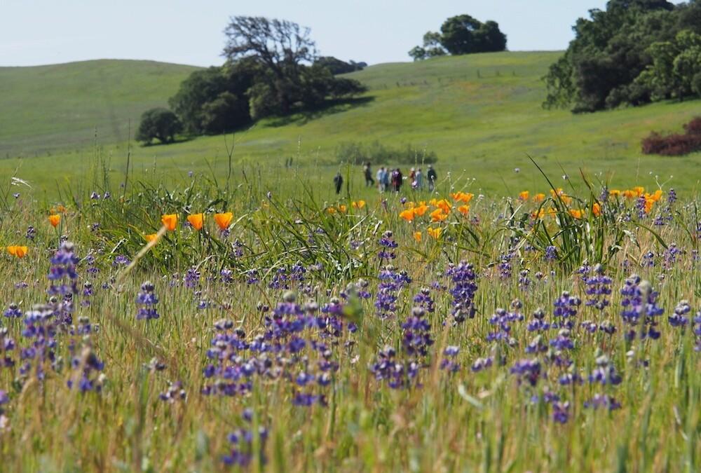 Valley Forum: Toward a Sustainable Future