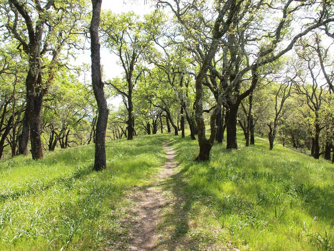 The Right Path for Sonoma Valley
