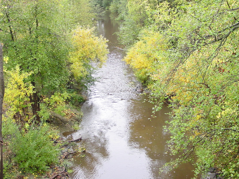 SEC Seeks Input on Steelhead Habitat Project