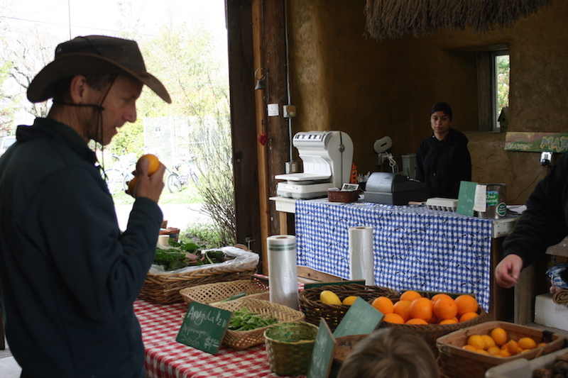 Harvest Market Returns for Growing Season