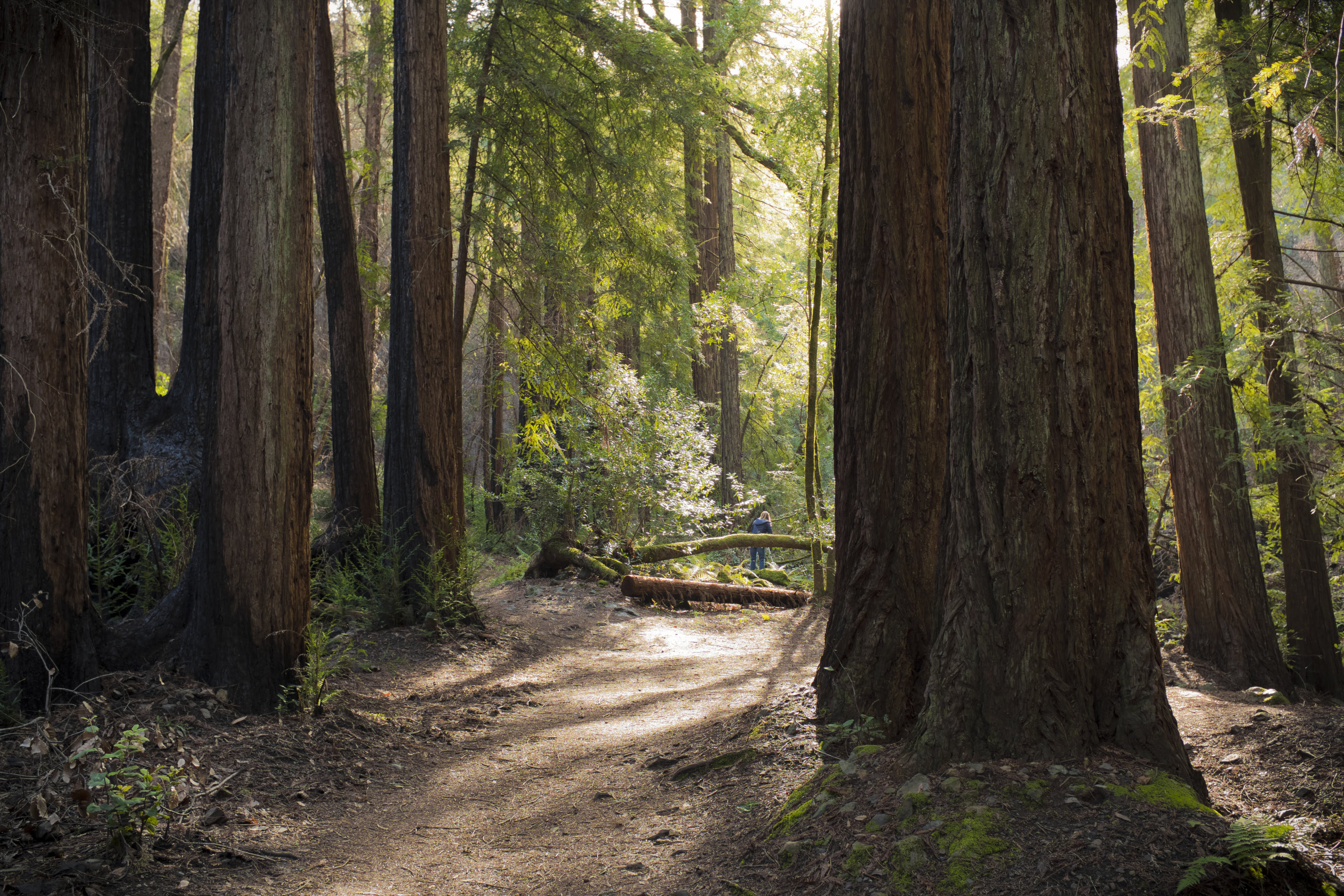 Redwood Forest Habitat Hike @ Sugarloaf Ridge State Park | Kenwood | California | United States