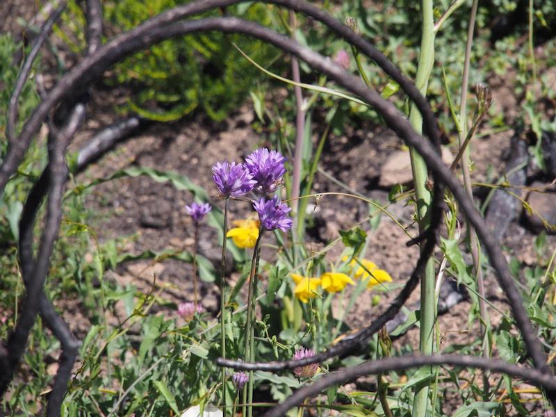 Sugarloaf Wildflower Walks @ Sugarloaf Ridge State Park