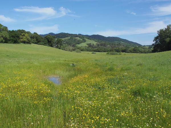 Van Hoosear Wildflower Preserve