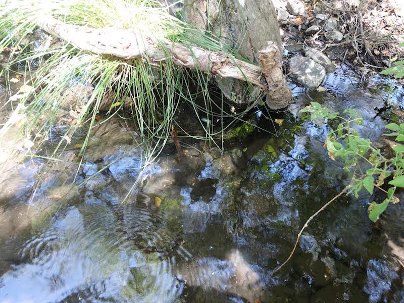 Research Team Monitors Stream Temps
