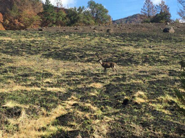 Caminata de la ecología del fuego / Fire Ecology Walk @ Sugarloaf Ridge State Park