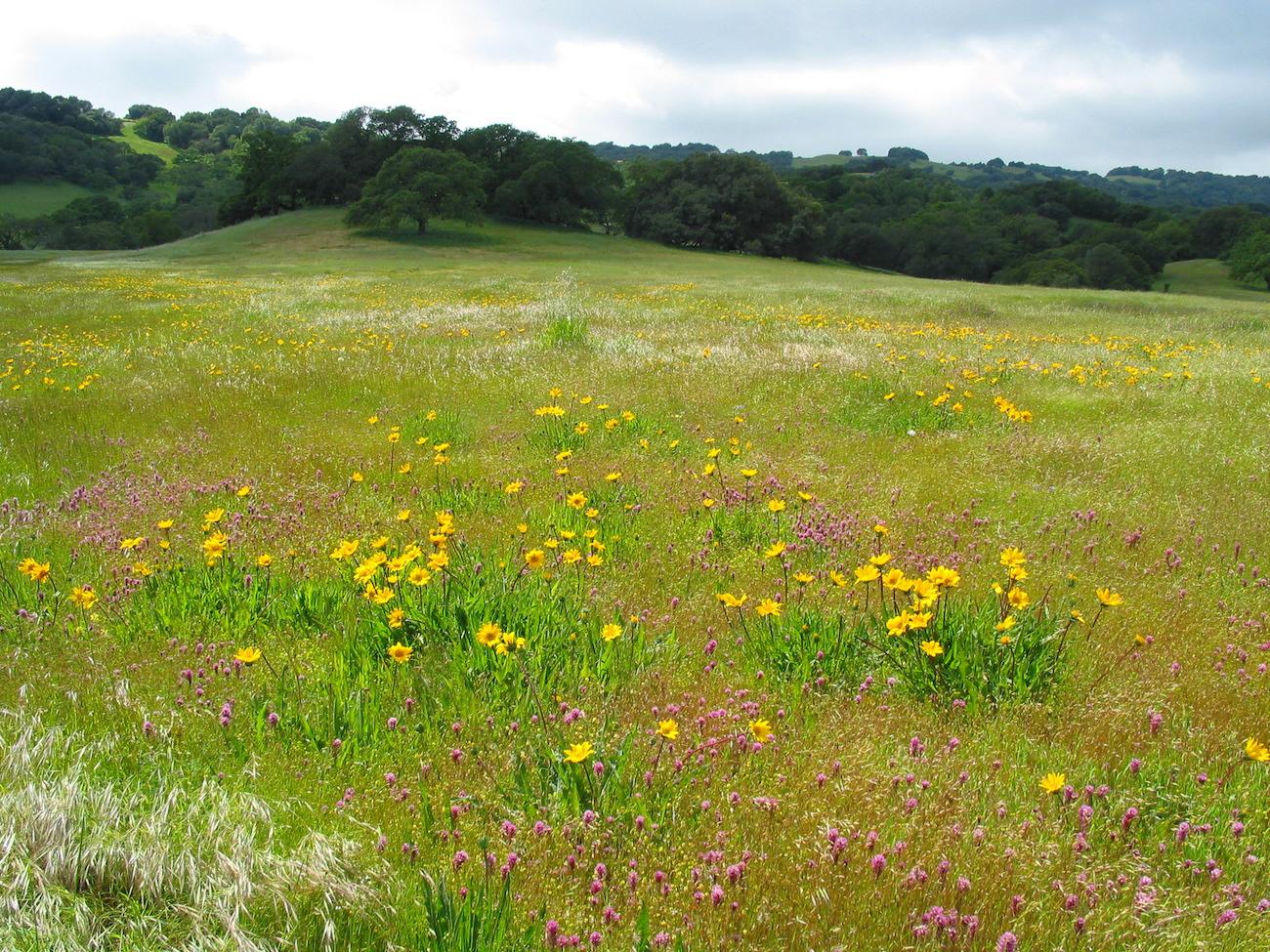 Wildflower Walks at Van Hoosear Preserve Van Hoosear Wildflower Preserve @ Van Hoosear Wildflower Preserve