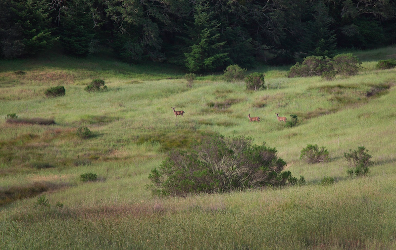 SEC Inaugural Hike at Saddle Mountain Preserve with Open Space District @ Saddle Mountain Open Space Preserve