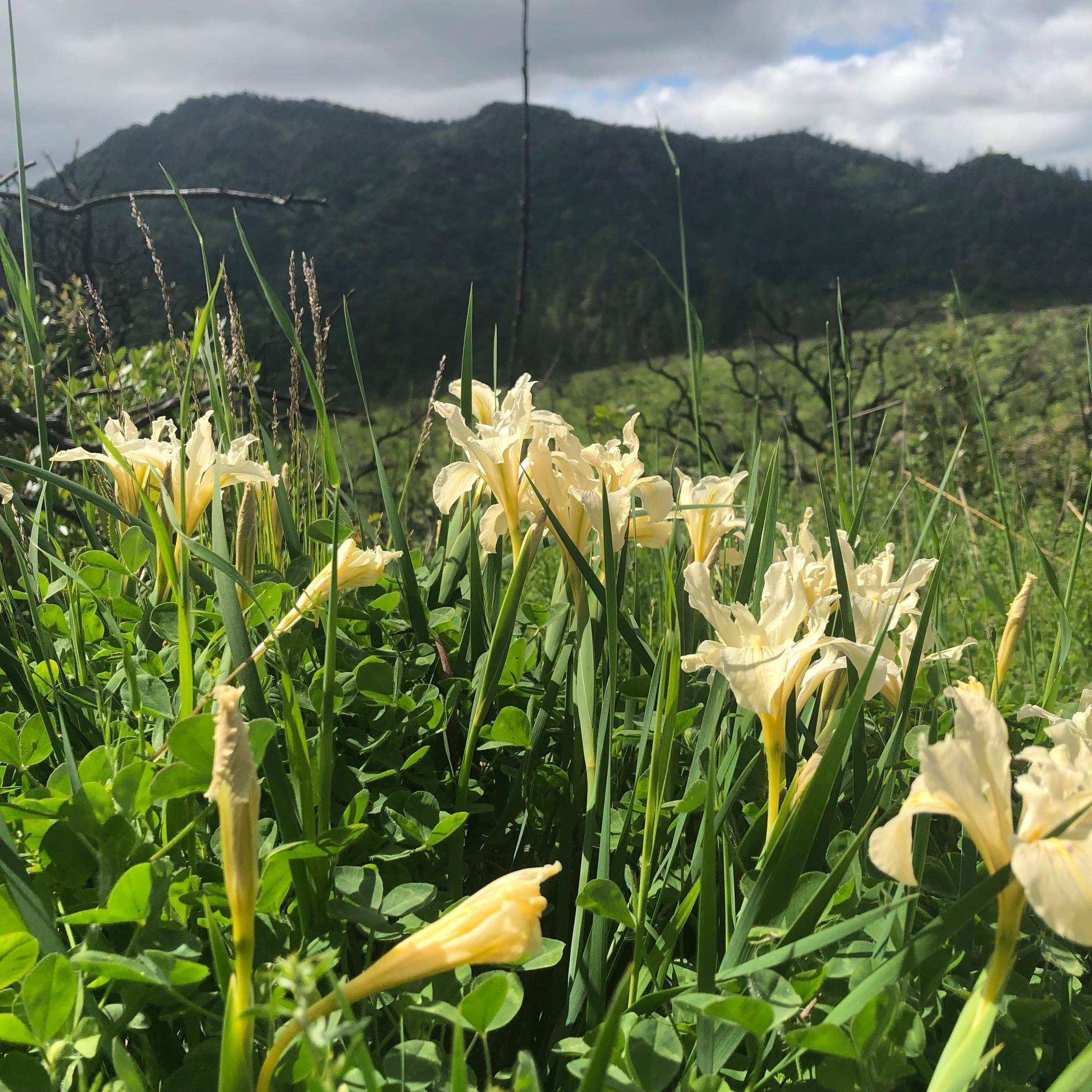 Senderos de flores @ Sugarloaf Ridge State Park | Kenwood | California | United States