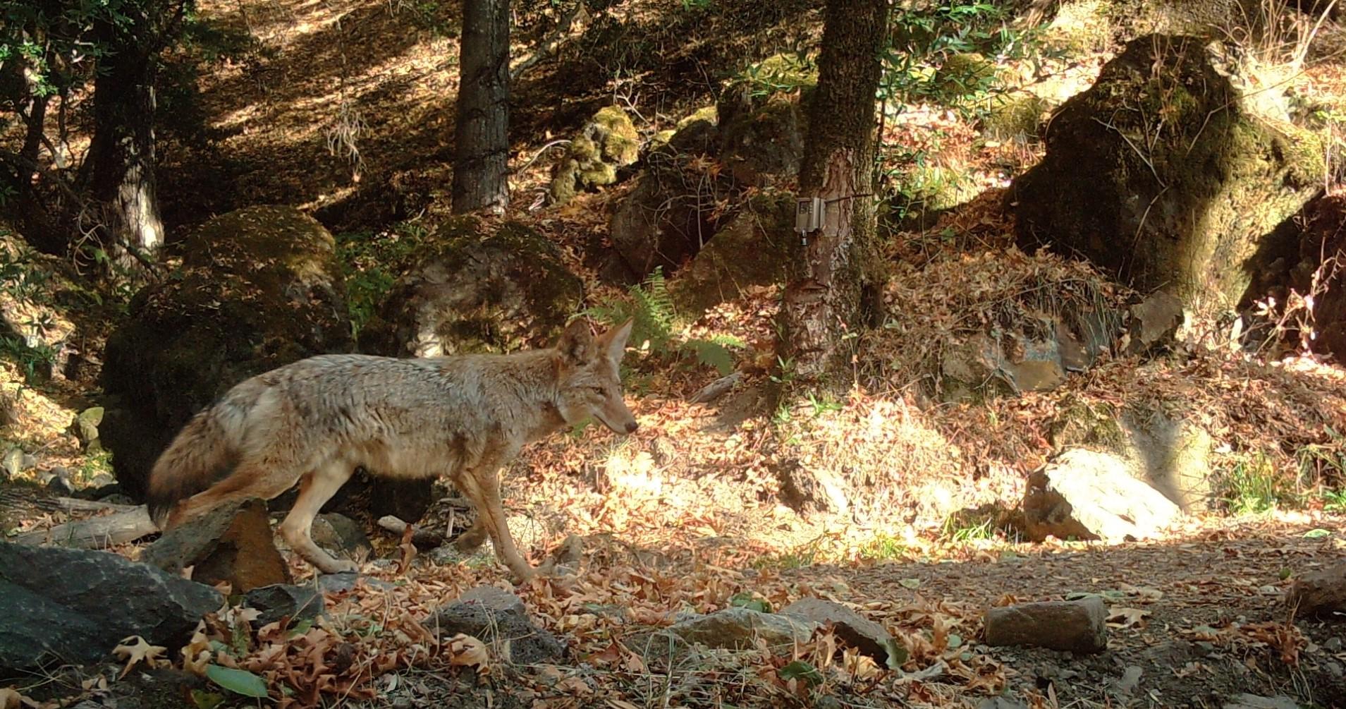 Senderos: Animales en Sugarloaf @ Sugarloaf Ridge State Park