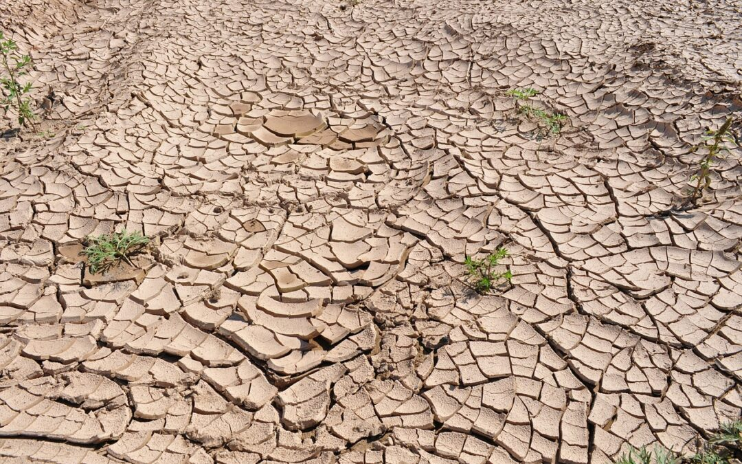 Another Dry Year