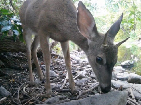 Wildlife Footage from a Backyard in Sonoma Valley