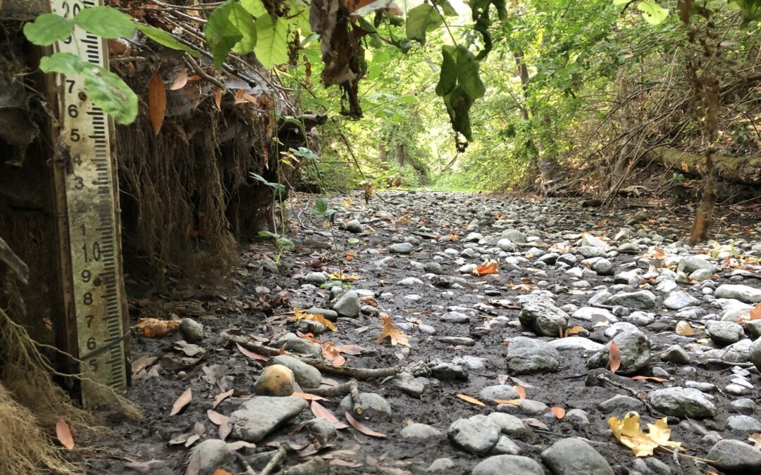 From August to September: An Update on our Watershed